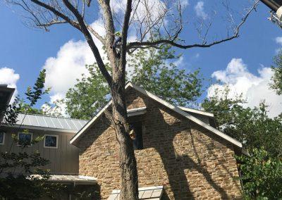 Natures Tree- Crane tree