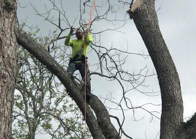 Natures Tree Crew in tree